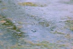 浮动海藻 免版税图库摄影