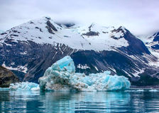浮动的冰山在冰河海湾国家公园,阿拉斯加 免版税库存照片