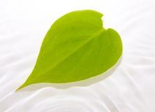 浮动的叶子水 图库摄影
