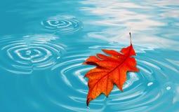 浮动的叶子 库存图片