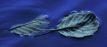 浮动的叶子 库存照片