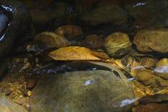 浮动的叶子水 库存图片