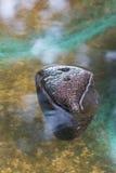 浮动的岩石 免版税图库摄影