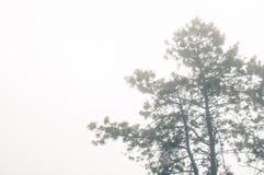 浮动雾 库存图片