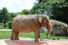 浴大象采取 免版税库存照片