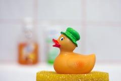 浴鸭子 库存照片