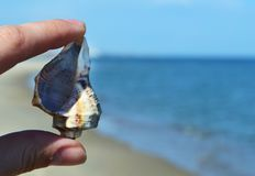 海†‹â€在海滩的‹壳 免版税库存照片
