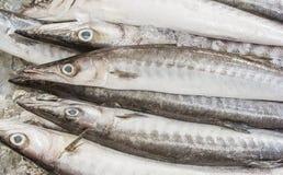 海、冰和鱼 免版税库存图片