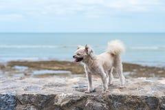 海上尾随在多岩石的海滩的愉快的乐趣,当旅行 库存照片