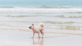 海上尾随在海滩的连续愉快的乐趣,当旅行 库存图片