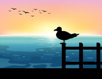 海上的Sihouette鸟 免版税库存照片