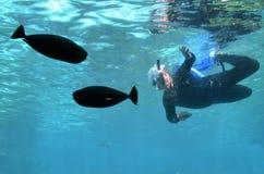 海世界的英属黄金海岸昆士兰澳大利亚鲨鱼湾 免版税库存照片