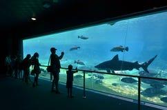 海世界的英属黄金海岸昆士兰澳大利亚鲨鱼湾 免版税图库摄影