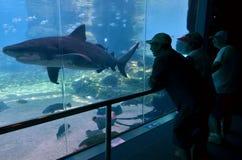 海世界的英属黄金海岸昆士兰澳大利亚鲨鱼湾 库存图片