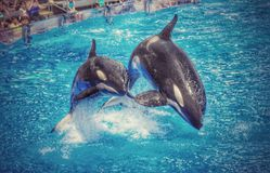 海世界鲸鱼 免版税库存照片