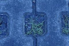 海军牡丹石头块步行道路在公园有绿草背景 图库摄影