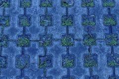 海军牡丹石头块步行道路在公园有绿草背景 库存图片
