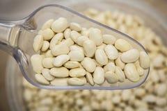 海军白色豌豆豆 图库摄影