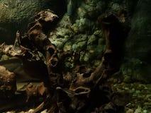 海军陆战队员植物 库存图片