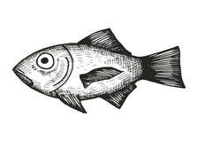 海剪影的鱼 图库摄影