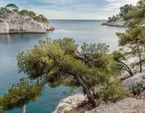海和杉树在Calanques 免版税库存照片