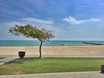 海和树 免版税库存图片