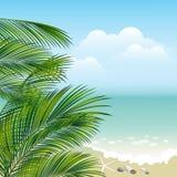 海和棕榈叶子 库存照片