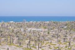 海和棕榈树在沙漠 库存图片