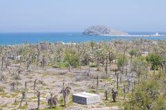 海和棕榈树在沙漠 免版税库存照片