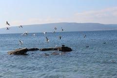 海和镇静天空和鸥 免版税库存照片