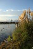 海在内陆水路附近的似燕麦的草在日落 库存图片