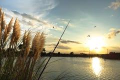 海在内陆水路附近的似燕麦的草在日落 免版税图库摄影