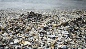 海在水附近轰击 免版税库存图片