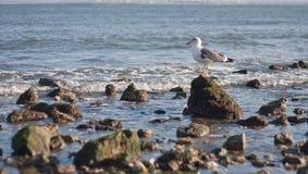 海堤防的看法 免版税库存图片