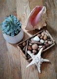 海壳、海星、坚果和植物静物画 免版税图库摄影