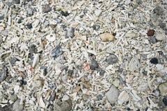 海壳、珊瑚和小卵石石头 免版税库存照片