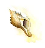 海壳。水彩绘画 免版税图库摄影