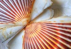 海壳亲吻贝壳 免版税库存图片