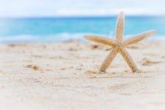 海壳和海星在热带海滩和海背景 库存照片