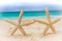 海壳和海星在热带海滩和海背景 免版税库存图片