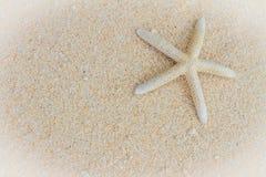 海壳和海星在热带海滩和海背景 免版税图库摄影