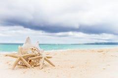 海壳和海星在热带海滩和海背景 图库摄影