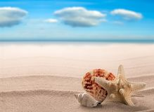 海壳和海星在白色海滩一个热带天堂海岛 免版税库存照片