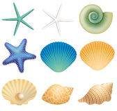海壳和海星 库存照片