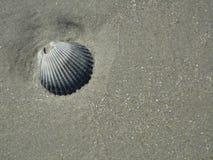 海壳和海滩沙子在灰色 库存图片