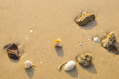 海壳和珊瑚在海滩 库存图片