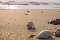 海壳和珊瑚在海滩 免版税图库摄影