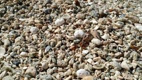 海壳和石头在一个完善的海滩 库存照片
