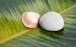 海壳和石头在榕属叶子背景 免版税库存图片