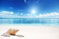 海壳和perls 免版税库存照片